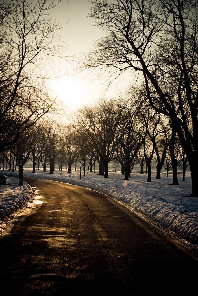 TreesMisc-0169.jpg