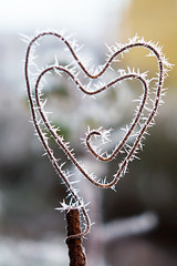 Frost... (Karin A ~) Tags: winter vinter wire frost heart hjrta