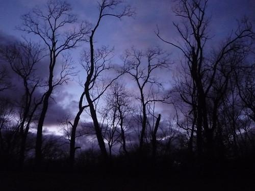 purple skies 001