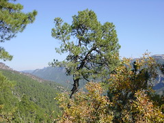 2002-10-26 11-15 Andalusien, Lissabon 144 Parque Natural Jaen