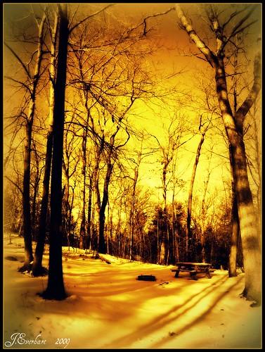 Golden Campsite in Winter by J.Everhart