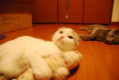 (tanabechikachan) Tags: moco maro