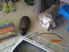Mm sticks! (airliebee) Tags: bunnies cadbury guyliancadbury