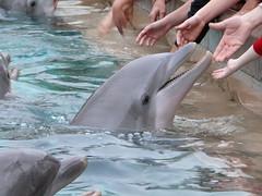 Dophins feeding