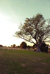 (taylla) Tags: park lake tree green grass leaves fence dock nikon clearsky d80