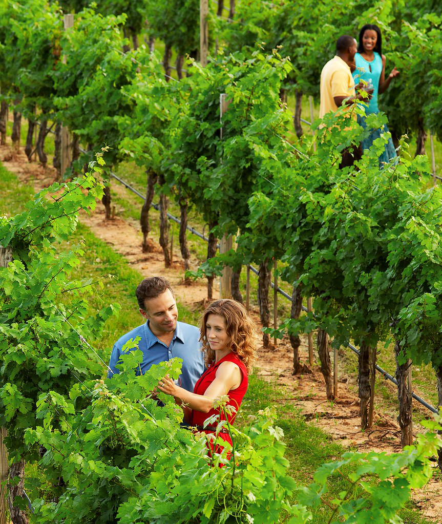 San Antonio, Texas Hill Country Vineyards