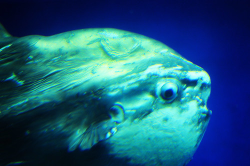 Sunfish are so weird