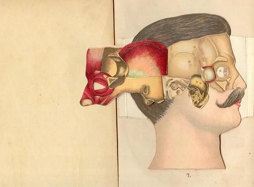 anatomie tete 4