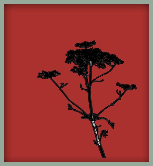 Röd hundkex