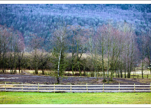Along the Fence Line...