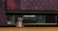 Sims 3 Pets 18
