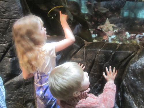 Checking out the sea stars and anemones