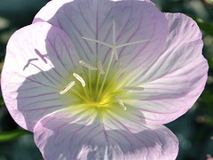 Searching for ET (Crayon Canvas) Tags: flowers summer sun flower macro garden petals blossom petal bloom mygearandme ringexcellence