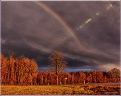 A rainbow over a forest (MyOakForest) Tags: winter forest rainbow wald regenbogen mywinners diamondclassphotographer
