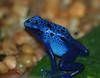 Cool Blue... PAD #1079