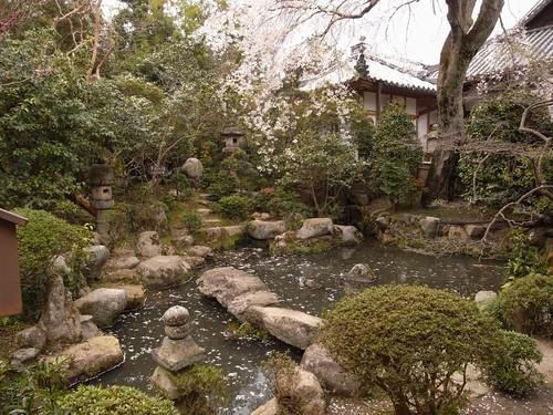 当麻寺(桜)-10