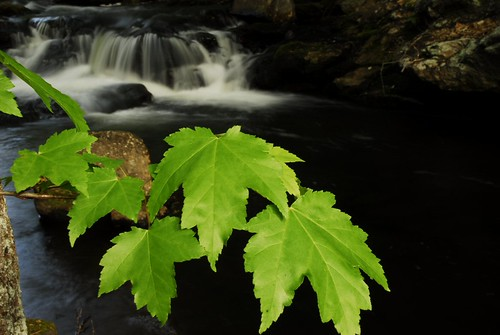 Maple Leaves at Old Wilton Reservoir Water Falls 1