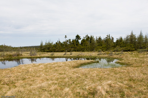 Cape Breton Fen