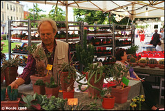 succulente (Alessandro Melillo [RonJe]) Tags: street cactus film pentax market kodak slide smc mercato mx mart piantegrasse piombino