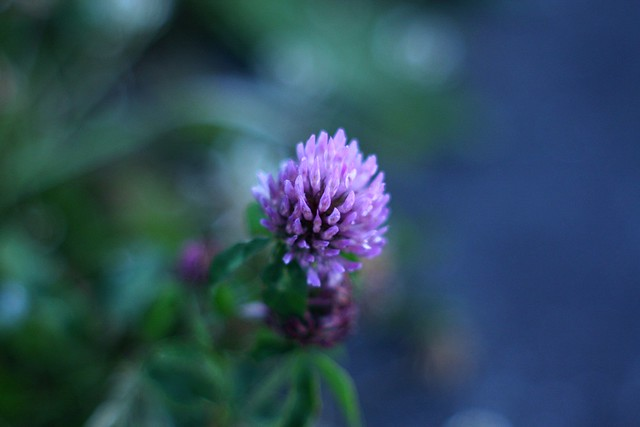 Red Clover | Broadway, Broadway & Grant