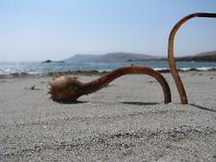 beached (emdot) Tags: california blur seaweed beach sand pacific kelp centralcoast cayucos seamonster slocounty meaning bluristhewordistheword thatyouheard itsgotgrooveitsgot