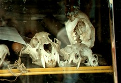 skulls (DigitalTribes) Tags: world travel film 35mm skulls ecuador bones 1991 dt ec digitaltribes markoneil
