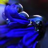 Lady Blue... (TIO...) Tags: bravo silky themoulinrouge blueheart firstquality visiongroup heresmimbrava tiosstyle thegardenofzen ishootwiththelight hugsforjuney collectinghugs wheresmymimbrava tioslight ladyblueisvibrantandalive deeeeeeeepblu oooohthebeautyofcolorandlightloveit ablueheartcanyouseeit abeautifuldeepvelvetyblue thatisthebluestblueever