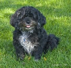 Our Mutt (jimgspokane) Tags: dogs abigfave diamondclassphotographer flickrdiamond onlythebestare