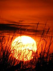 [フリー画像] [自然風景] [朝日/朝焼け] [草原の風景] [橙色/オレンジ]       [フリー素材]