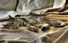 The Lion Sleeps Tonight - HDR (by Peter Gorges)