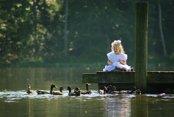 Abigail & the Ducks