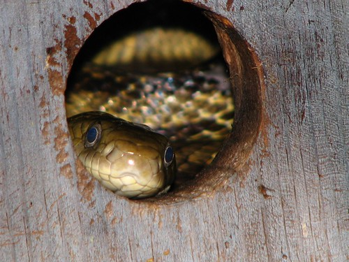 Snake in the bird house