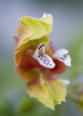 Jardim (Carla Robalo Martins) Tags: flower portugal photo flor vivid cano alentejo breathtaking estremoz clickart blueribbonwinner bouncingball kartpostal digitalphotographyworkshop creativephotos peaceaward nationalgeographicareyougoodenough keepyoureyesopen lanatura freenature naturephotoshp exemplaryshots lafelicidad closetoreality calmpeace dazzlingshots bcl goldwildlife unlimitedphotos worldtrekker discoveryphotos nationalgeographicportugal screamofthephotographer breathtakinggoldaward lostrotamundo bienvenidostodoslosrecuerdos theworldinflickr mariposasflorafauna dragonflyawards bokehmasters oprazerdefotografar transcenddpassezsupere diamondphotographersclub cafeelite lovelylovelyphoto walkinonby platinumpeaceaward championsphotography favoritenaturalcolorslights thedarkknights aboutiberia livinglifebehindthelens obiettivofotocamera breathtakinghalloffame breathtaking~halloffame