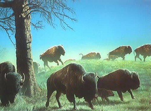 nature earth and luther standing bear Luther standing bear was an oglala lakota earth was bountiful and we were surrounded with the blessings of the great away from nature, becomes hard.