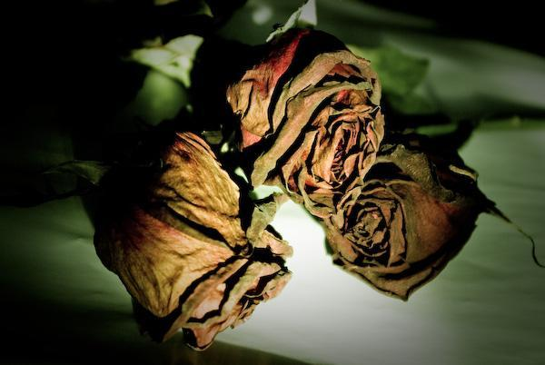 Death roses