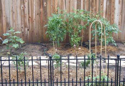 Half of the garden.