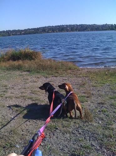 Greenlake Walk