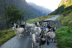 DSC_0039 (morland) Tags: norway lbs