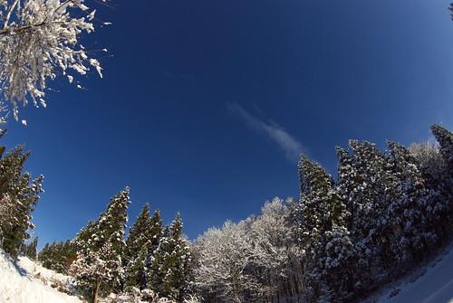 20081207082雪明け