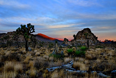 Joshua Tree Sunrise Alpenglow (Bill Wight CA) Tags: california sunrise nationalpark desert joshuatree cubism anawesomeshot billwight joshuatree20082