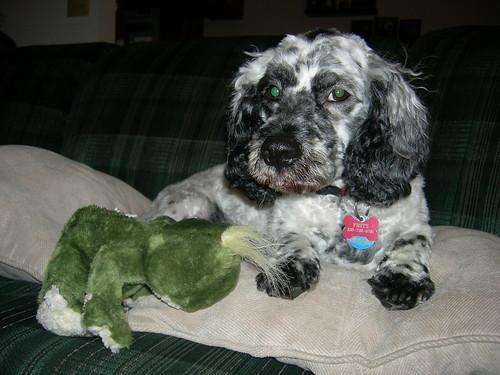 Isn't Fritz cute?
