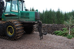 Timberjack 1710D agus Dougal (Mrtainn) Tags: dog chien skye co cane scotland highlands isleofskye alba forestry hond perro hund pies kutya labradoodle szkocja hundur suns johndeere pes dougal schottland ecosse anjing timberjack kopek skottland porteur  koira skotlanti kyleakin koer 1710d forwarder uo cine forstwirtschaft anteileansgitheanach foresterie skogsbruk c  lenictwo metstalous metsnhoito skovbrug  gidhealtachd adhartair alltanavaig coilltearachd caolacainn eileansgitheanach johndeere1710d skotare timberjack1710d forstgerte forstwesen rckezug  kuormatraktori  skogindustri skogvesen  enginyeriaforestal lesnictv  ingenierademontes basotze umarstvo selvicoltura
