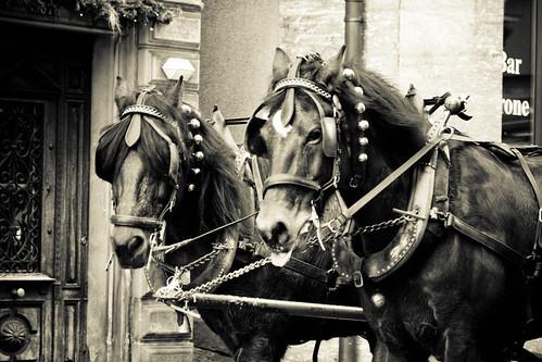 Horses in Einsiedeln