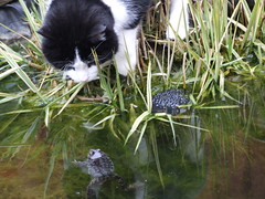 That's the wonder of you (Toffycrackle) Tags: cat paw pond oneofakind frog curiosity frogspawn lifeisbeautiful hartlepool otw takeitoutside abeautifulmoment