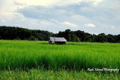 Kampung Jambu Bungai