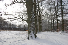 DSC_0113 (Elektrovoice) Tags: winter wald allee