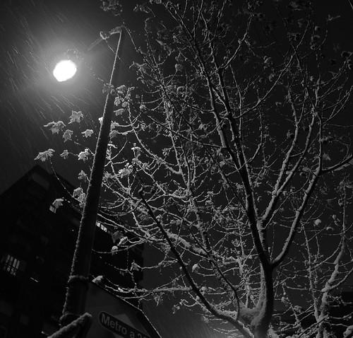 Farola árbol