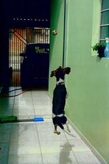 Nicky and the Ball (Daniel Pascoal) Tags: dog film cão public analog 35mm ball jump pentax cachorro filme bola pulo nicky kodak400 analogic analógico pentaxme danielpg danielpascoal