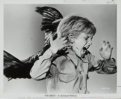 The Birds (1963) Promotional Photos 3/4 (Moviefan1014) Tags: birds taylor rod alfred hitchcock tippi hedren