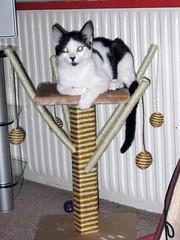 Seuss relaxing- Jan.09 (besthorpe) Tags: cat scratchingpost